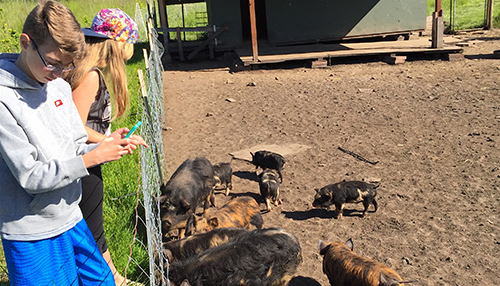 Baby Pigs at Sweet Earth Farm on San Juan Island