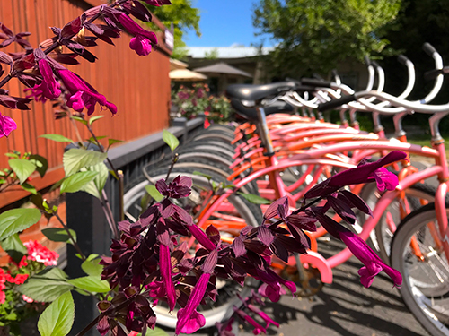 Earthbox Inn & Spa - Free Beach Cruiser Bicycles
