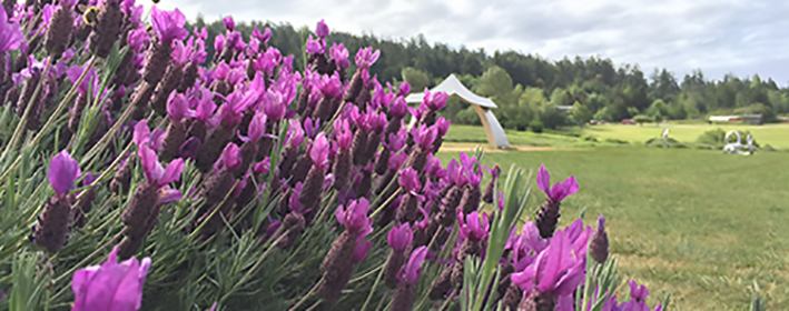Interesting Farms to Visit on San Juan Island, Friday Harbor